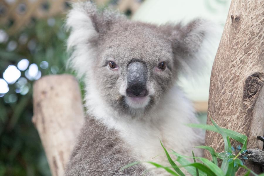 1_13 Australia15.jpg