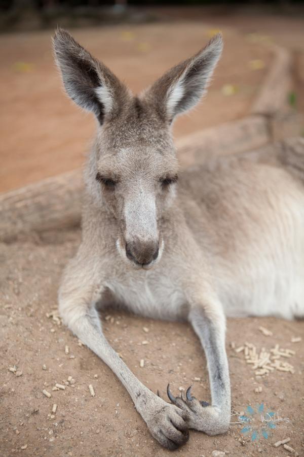 1_13 Australia27.jpg
