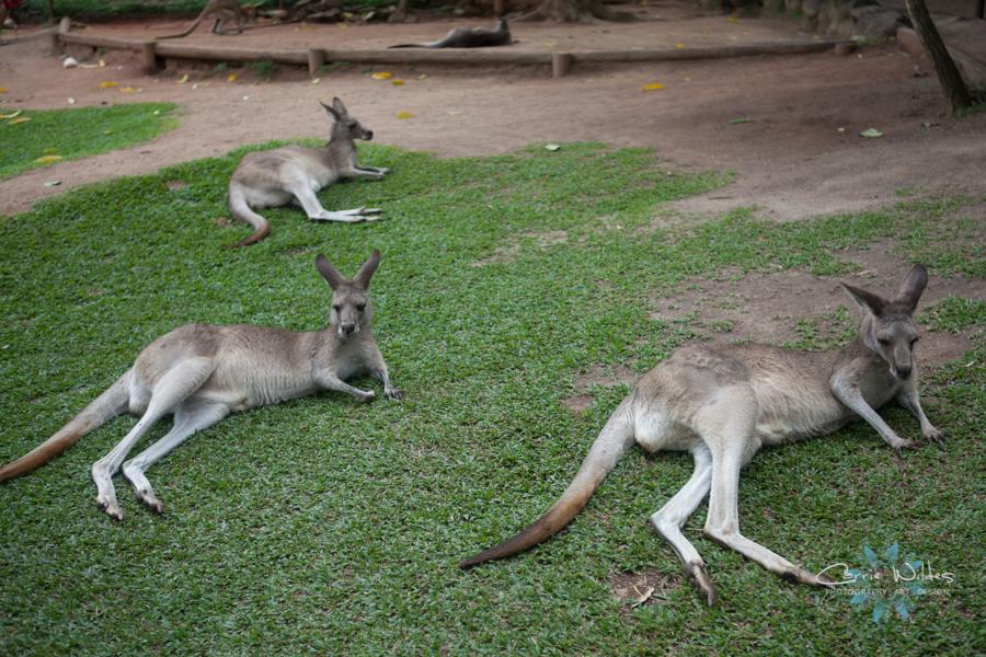 1_13 Australia28.jpg