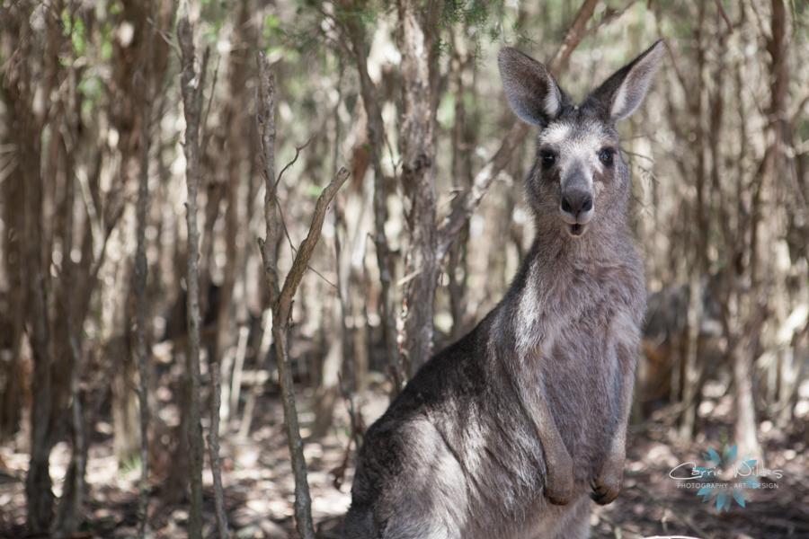 1_13 Australia29.jpg