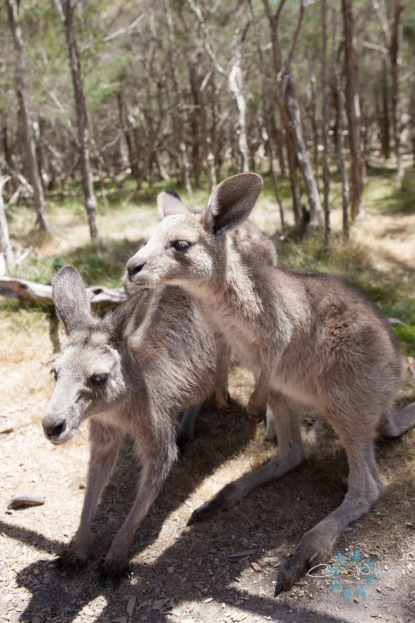 1_13 Australia31.jpg