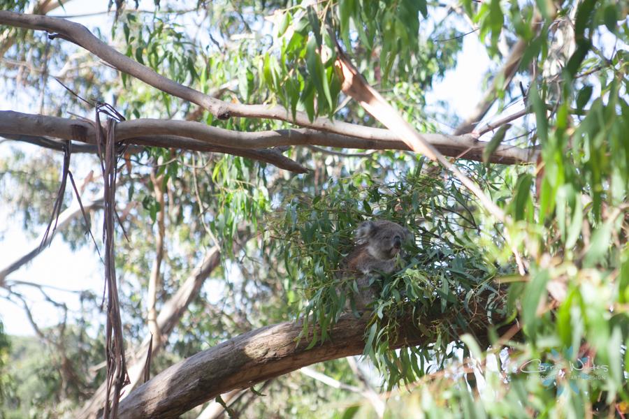 1_13 Australia53.jpg
