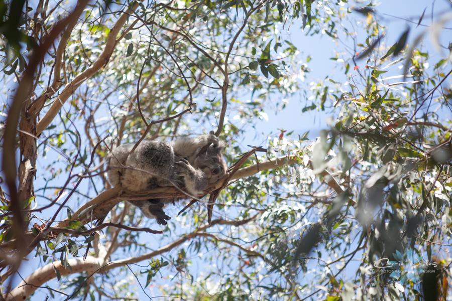 1_13 Australia54.jpg