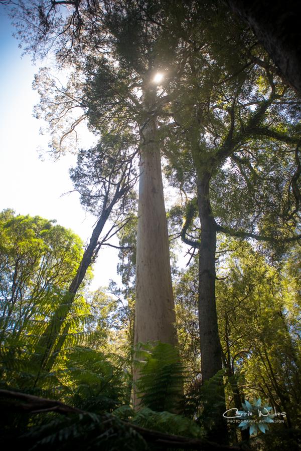 1_13 Australia57.jpg