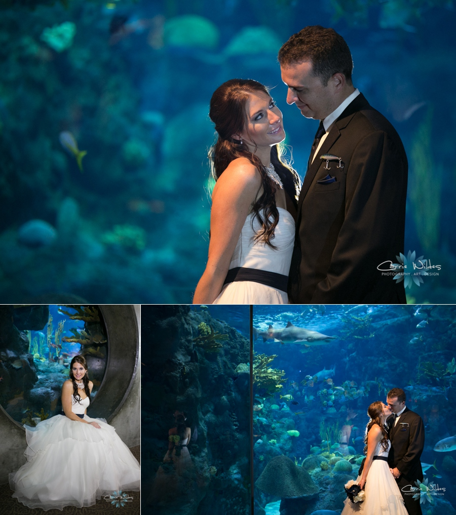 1_18_14Florida_Aquarium_Wedding_0006.jpg