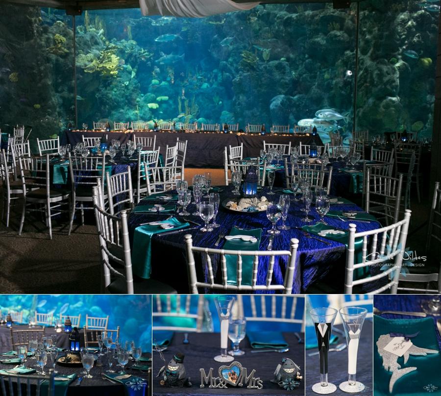 Gabby Amp David Florida Aquarium Carrie Wildes Photography