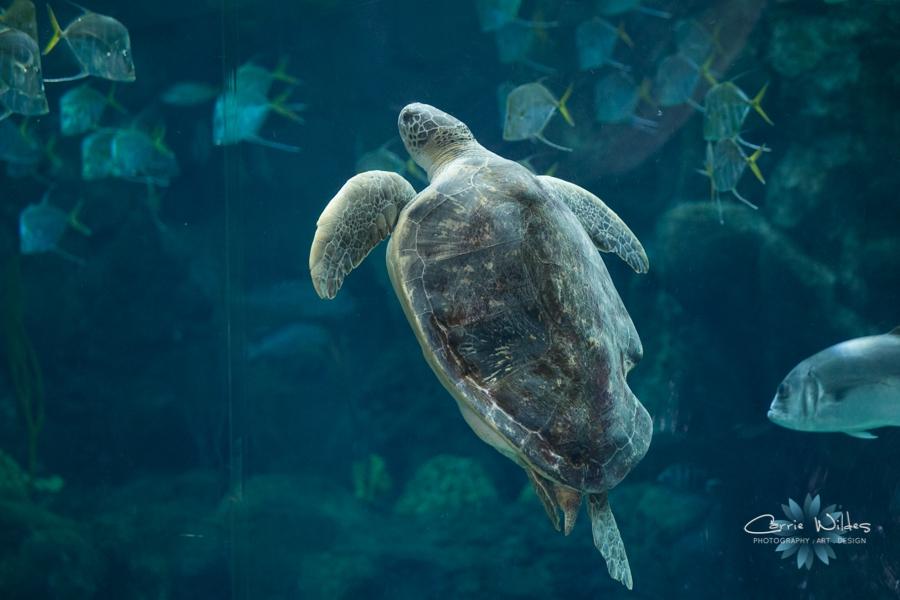 7_19_14_Florida_Aquarium__0009.jpg