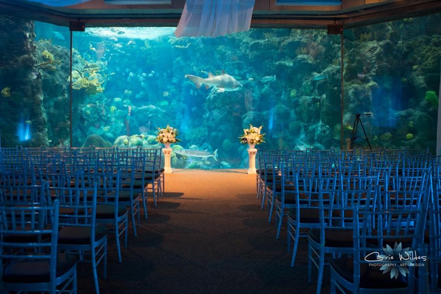 10_18_14 Florida Aquarium_0007.jpg