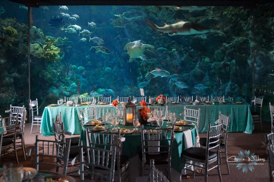2_14_15 Florida Aquarium Wedding_0019.jpg