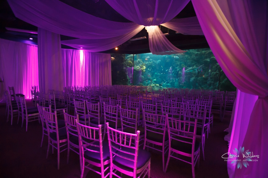 8_1_15 Florida Aquarium Wedding_0084.jpg