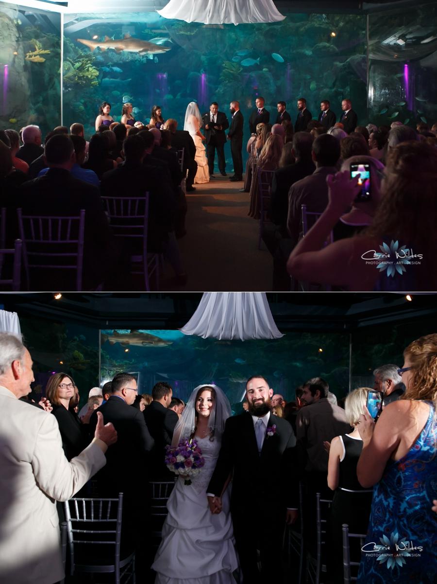 8_1_15 Florida Aquarium Wedding_0013.jpg