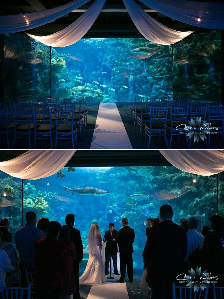 1_15_16 Florida Aquarium Wedding_0001.jpg