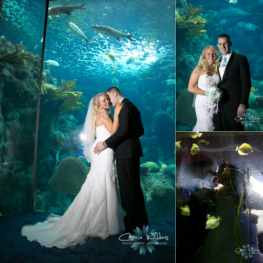 1_15_16 Florida Aquarium Wedding_0011.jpg