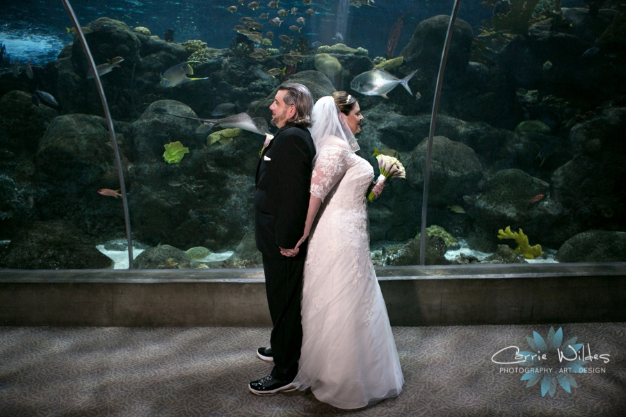 1_31_16 Florida Aquarium Wedding_0005.jpg