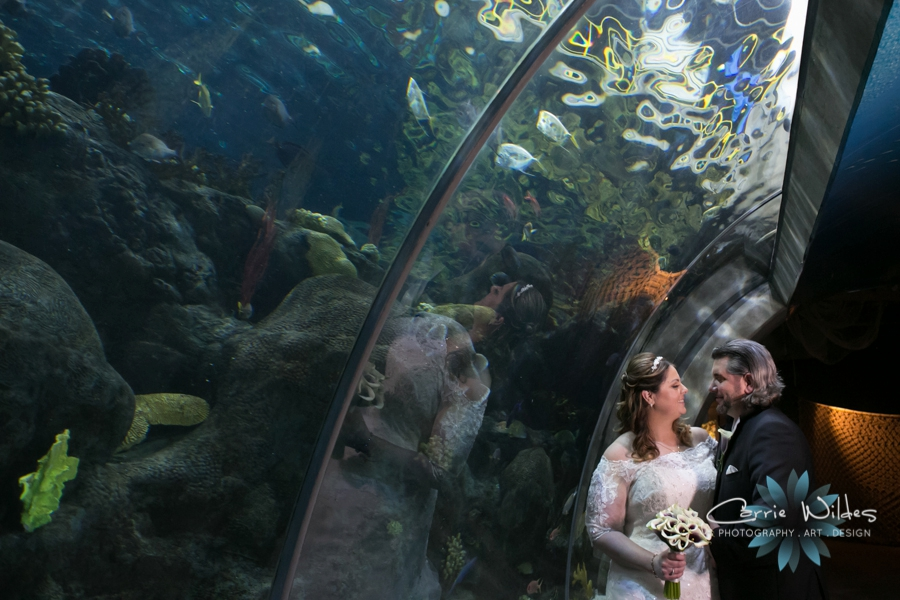 1_31_16 Florida Aquarium Wedding_0013.jpg