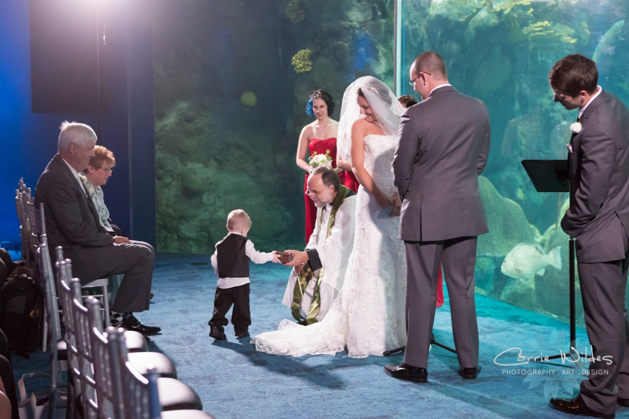 7_15_16 Florida Aquarium Wedding_0014.jpg