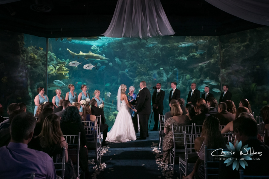 9_17_16 Alecia and Donald Florida Aquarium Wedding_0019.jpg