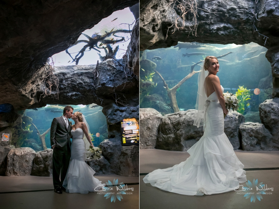 2_17_18 Kristin and Curtis Florida Aquarium Wedding_0027.jpg