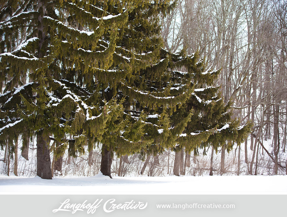 LanghoffCreative-20130308-winter10-image.jpg