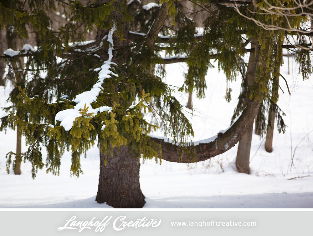 LanghoffCreative-20130308-winter11-image.jpg