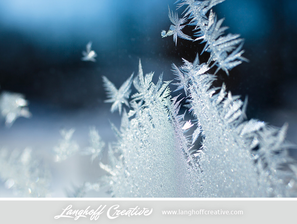 LanghoffCreative-frost-macro-photography_Jan06-2014-photo-3.jpg