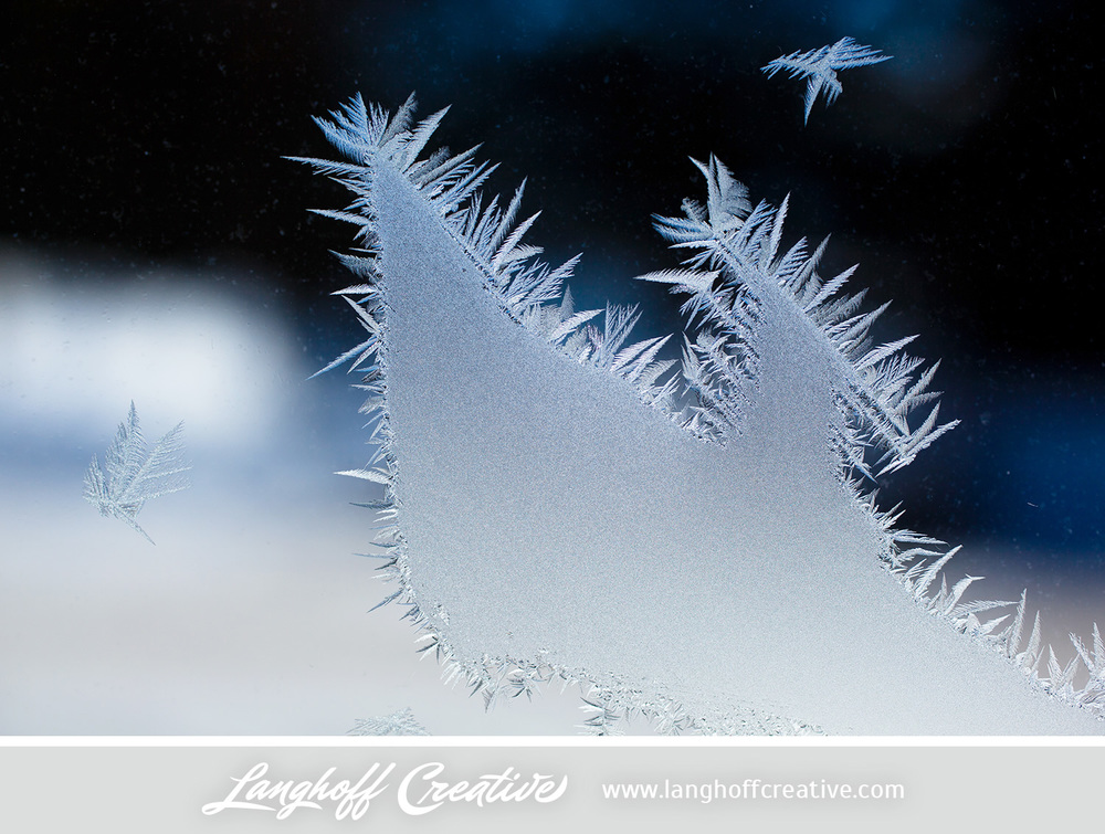 LanghoffCreative-frost-macro-photography_Jan06-2014-photo-5.jpg