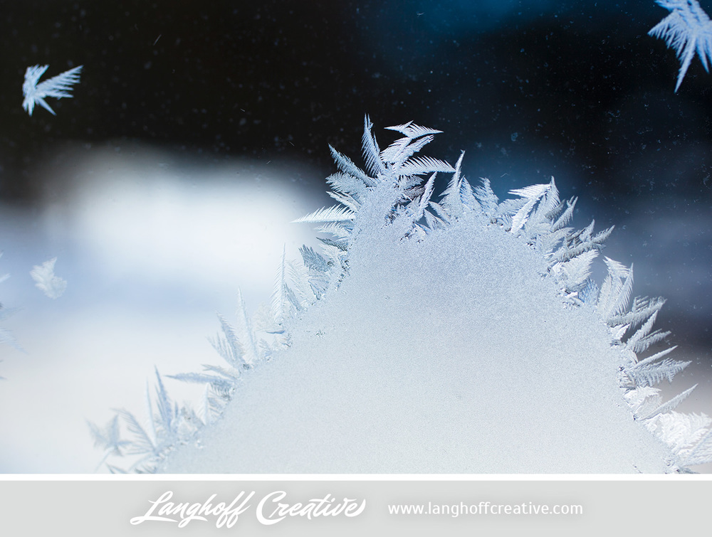 LanghoffCreative-frost-macro-photography_Jan06-2014-photo-7.jpg