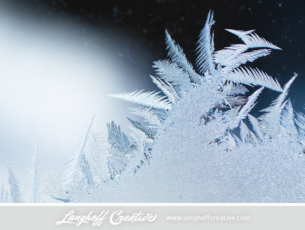 LanghoffCreative-frost-macro-photography_Jan06-2014-photo-8.jpg