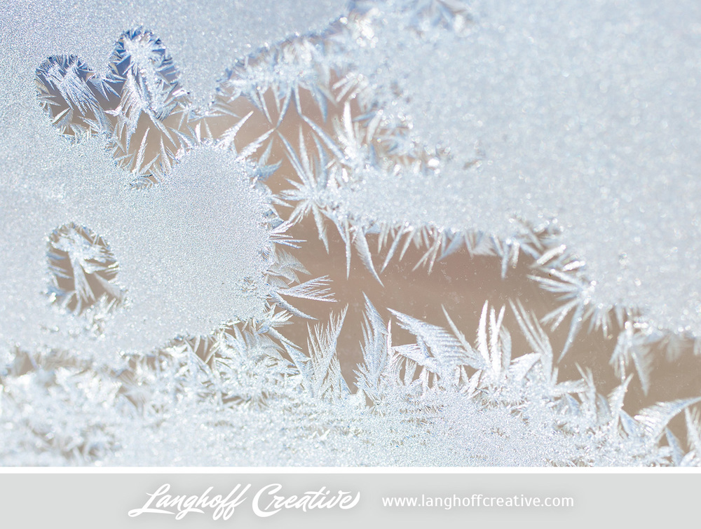 LanghoffCreative-frost-macro-photography_Jan06-2014-photo-9.jpg
