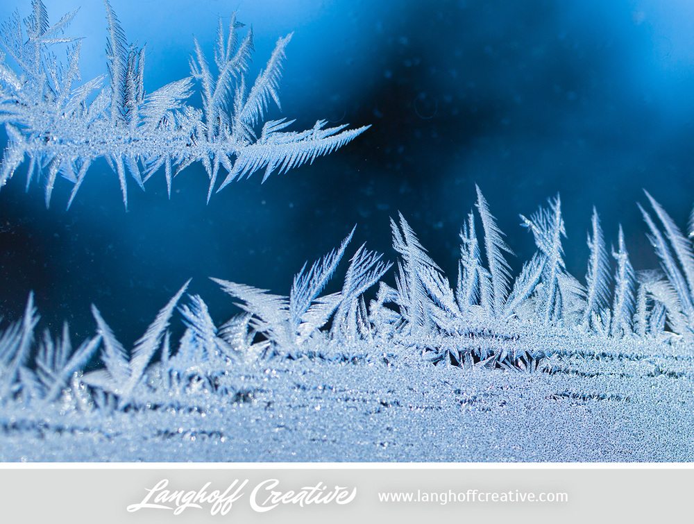 LanghoffCreative-frost-macro-photography_Jan06-2014-photo-15.jpg