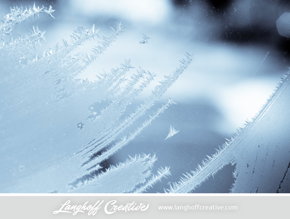 LanghoffCreative-frost-macro-photography_Jan06-2014-photo-16.jpg
