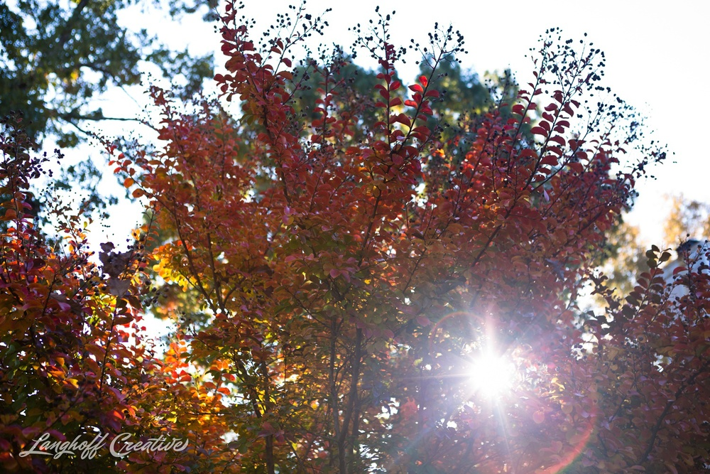 FallColors-FallMorning-LanghoffCreative-20141030-1-photo.jpg