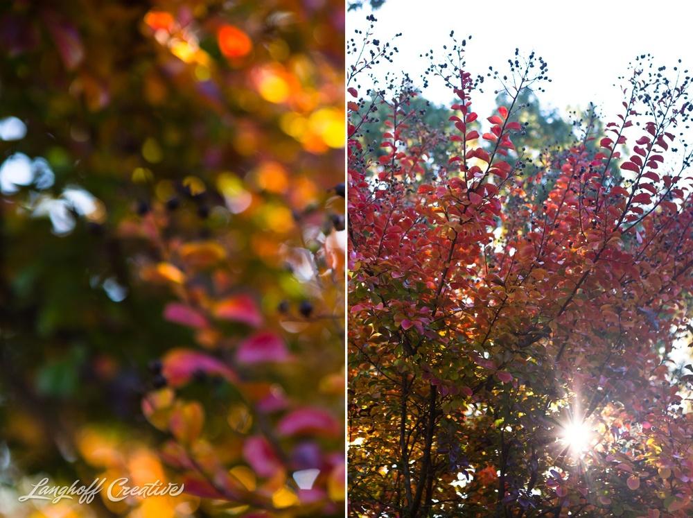 FallColors-FallMorning-LanghoffCreative-20141030-3-photo.jpg