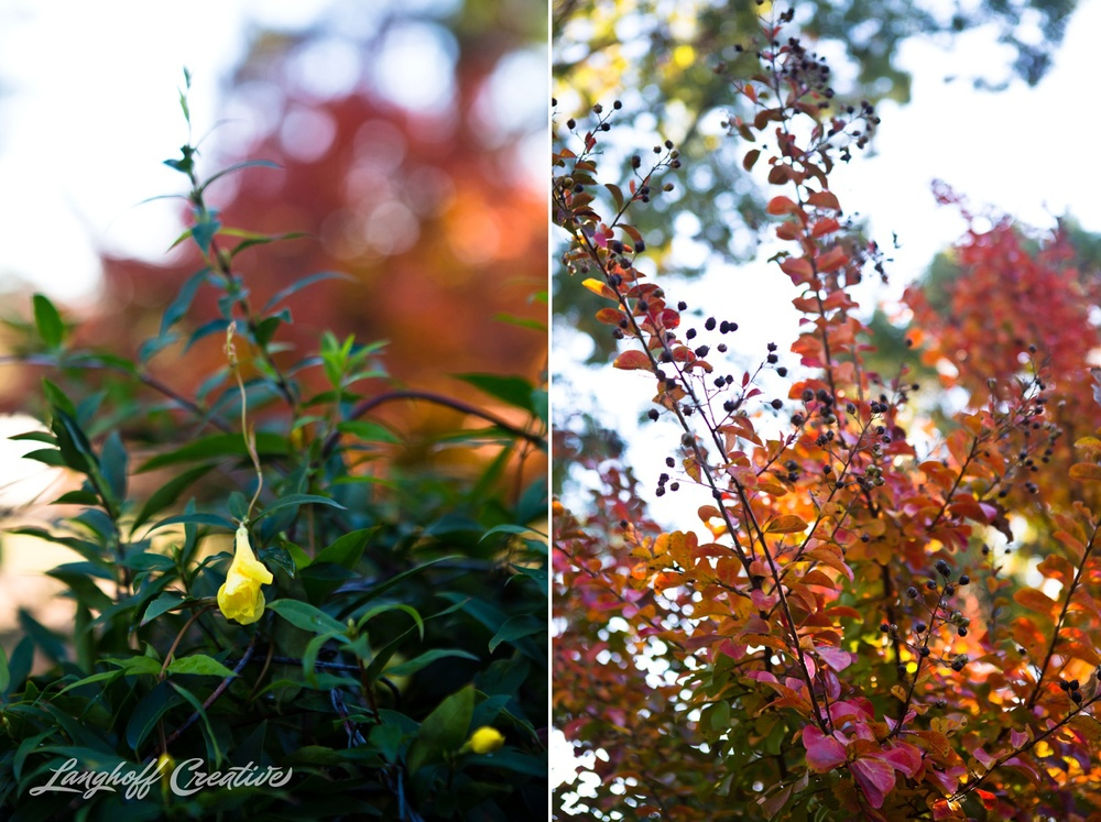 FallColors-FallMorning-LanghoffCreative-20141030-5-photo.jpg
