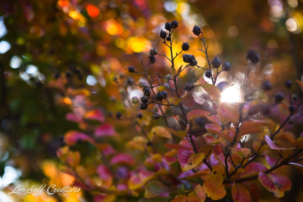 FallColors-FallMorning-LanghoffCreative-20141030-7-photo.jpg