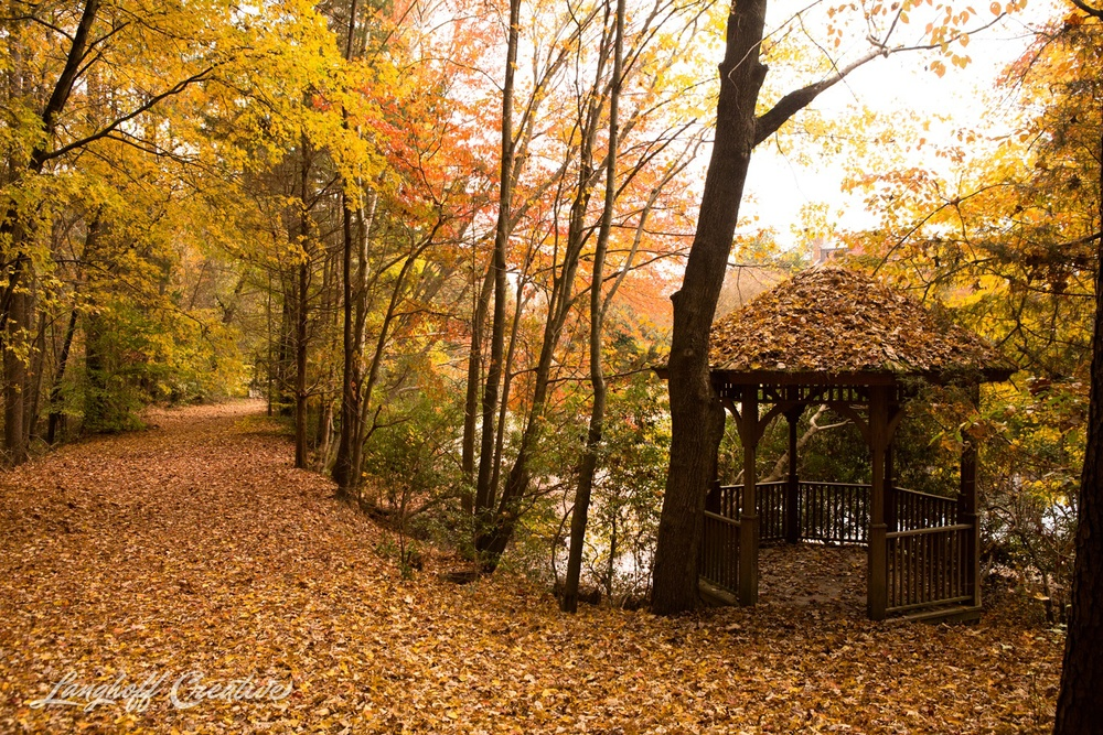 FallColors-NatureWalk-NorthCarolina-HistoricOakViewCountyPark-LanghoffCreative-20141113-4-photo.jpg