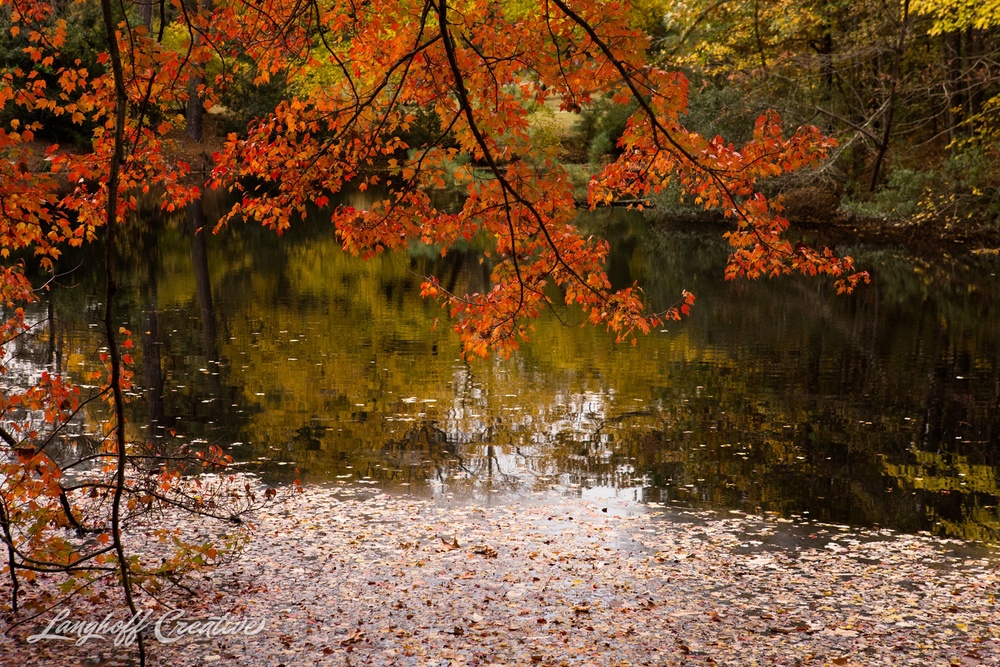 FallColors-NatureWalk-NorthCarolina-HistoricOakViewCountyPark-LanghoffCreative-20141113-6-photo.jpg
