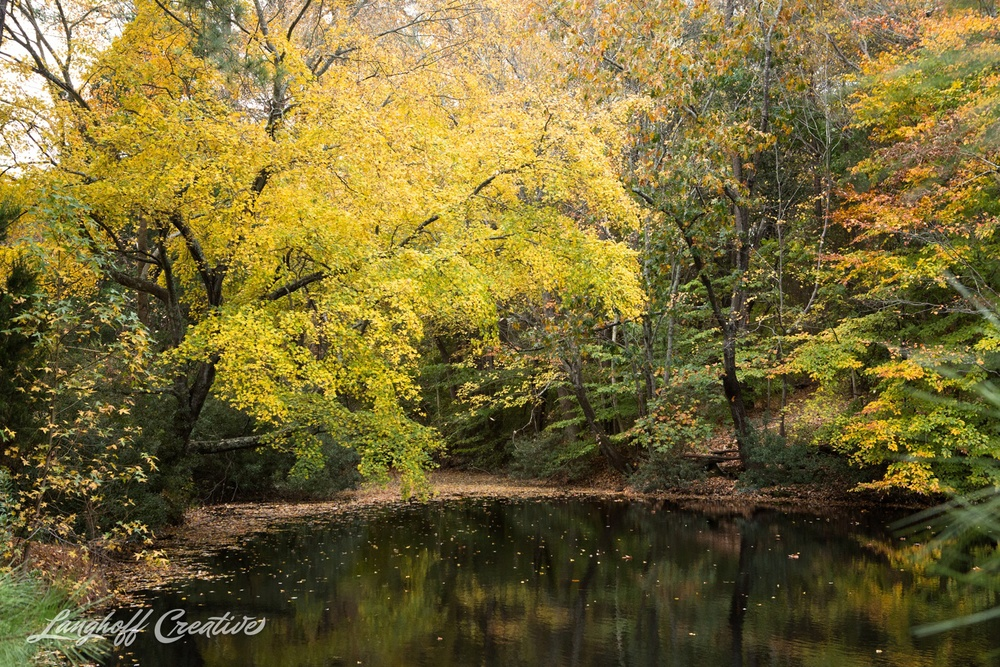 FallColors-NatureWalk-NorthCarolina-HistoricOakViewCountyPark-LanghoffCreative-20141113-8-photo.jpg