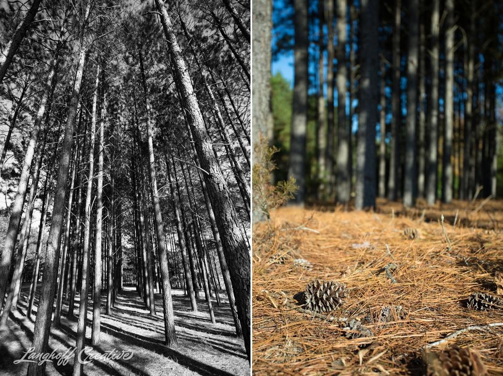 BrightSideYouthRanch-NatureWalk-SouthCarolina-HorseRanchProperty-LanghoffCreative-20141115-3-photo.jpg