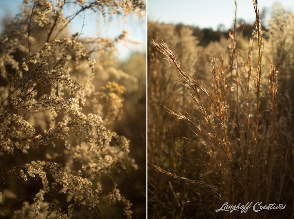 BrightSideYouthRanch-NatureWalk-SouthCarolina-HorseRanchProperty-LanghoffCreative-20141115-7-photo.jpg