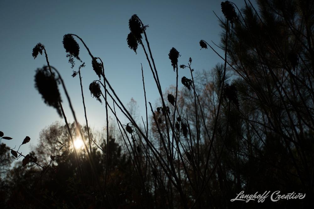 BrightSideYouthRanch-NatureWalk-SouthCarolina-HorseRanchProperty-LanghoffCreative-20141115-10-photo.jpg