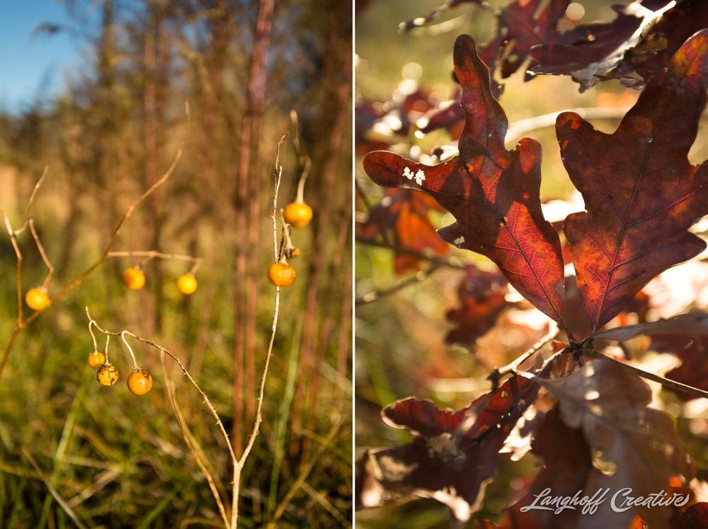 BrightSideYouthRanch-NatureWalk-SouthCarolina-HorseRanchProperty-LanghoffCreative-20141115-12-photo.jpg
