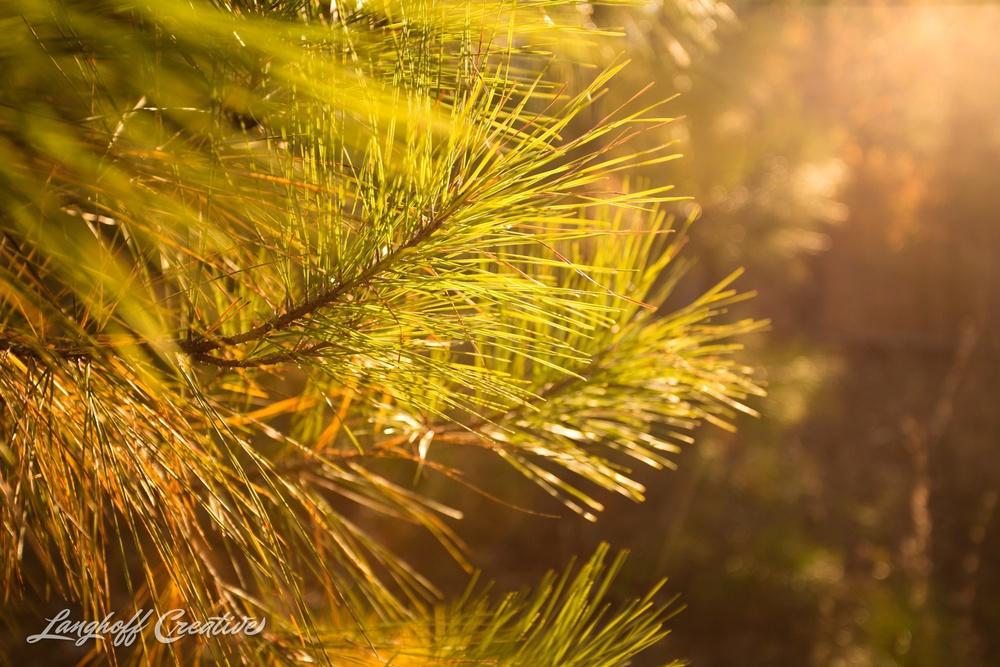 BrightSideYouthRanch-NatureWalk-SouthCarolina-HorseRanchProperty-LanghoffCreative-20141115-13-photo.jpg