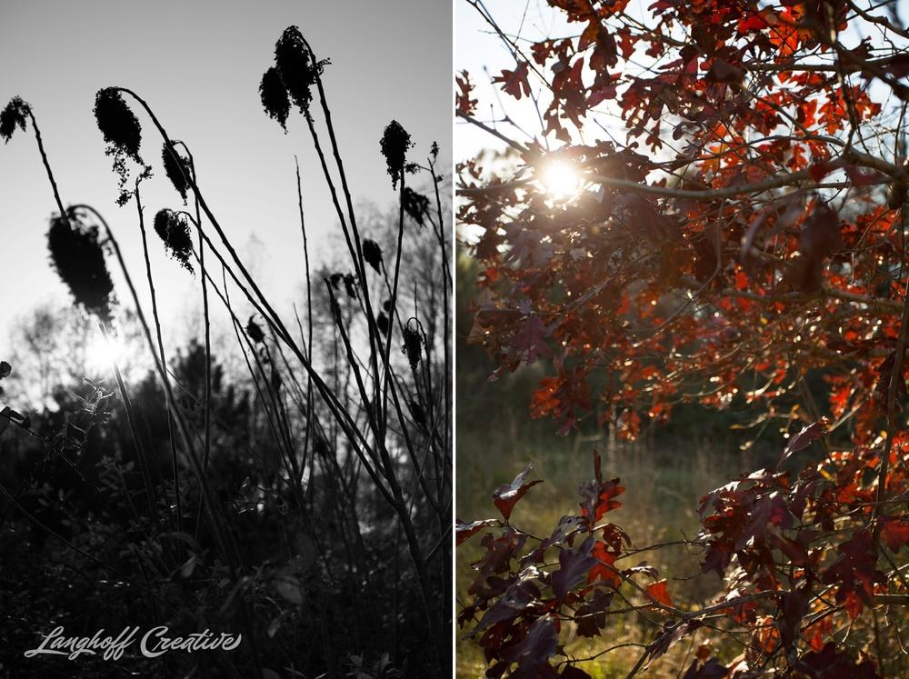 BrightSideYouthRanch-NatureWalk-SouthCarolina-HorseRanchProperty-LanghoffCreative-20141115-11-photo.jpg