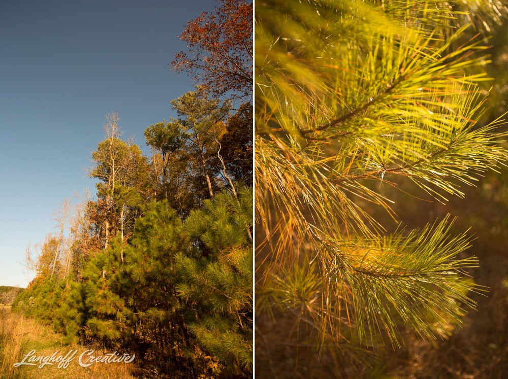 BrightSideYouthRanch-NatureWalk-SouthCarolina-HorseRanchProperty-LanghoffCreative-20141115-14-photo.jpg