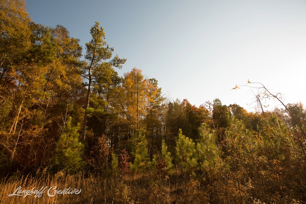 BrightSideYouthRanch-NatureWalk-SouthCarolina-HorseRanchProperty-LanghoffCreative-20141115-16-photo.jpg