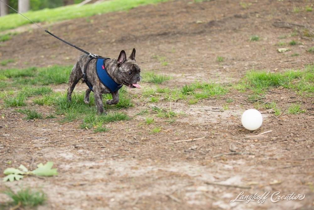 RaleighPhotographer-DocumentaryPhotographer-DocumentaryFamilyPhotography-RealLifeSession-FamilyPhotography-RaleighFamily-FamilySession-PullenPark-FrenchBulldog-Pets-Furbaby-LanghoffCreative-2015Andrea-2-photo.jpg