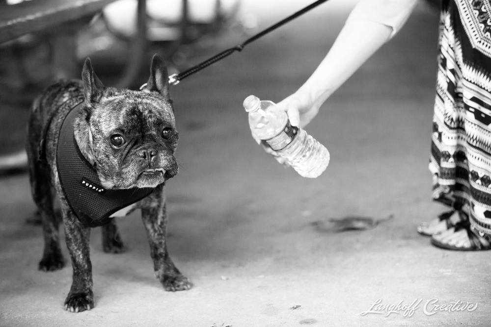 RaleighPhotographer-DocumentaryPhotographer-DocumentaryFamilyPhotography-RealLifeSession-FamilyPhotography-RaleighFamily-FamilySession-PullenPark-FrenchBulldog-Pets-Furbaby-LanghoffCreative-2015Andrea-7-photo.jpg