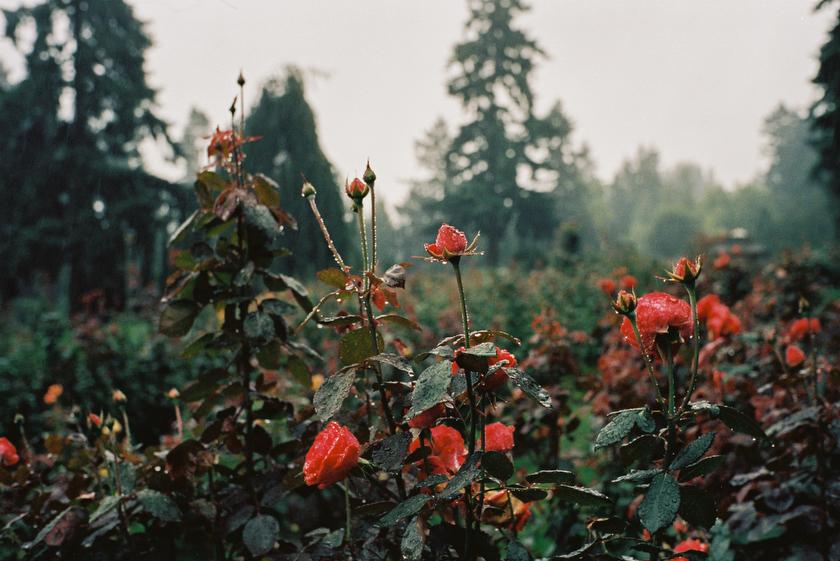 02-Portland Rose Garden-111010-ac_144_111010_Portland.psd