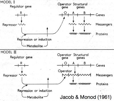 small RNA mechanisms